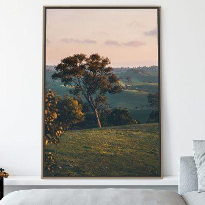 Rural tree at sunset